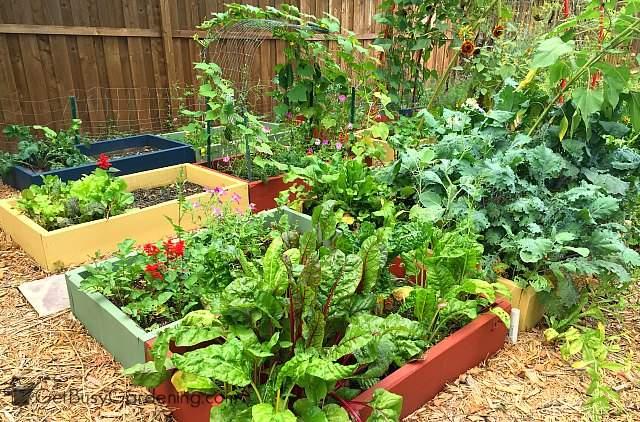 My 2015 vegetable garden