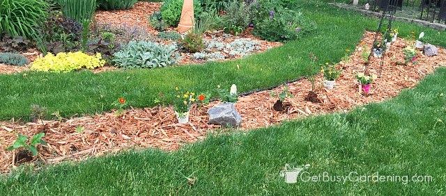 Annuals garden design