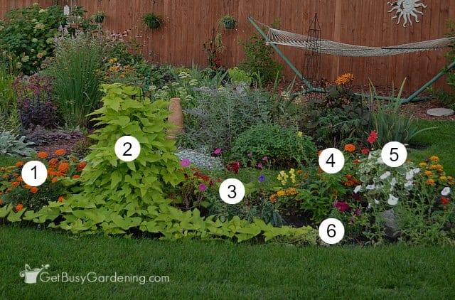 Annuals garden flowers identified