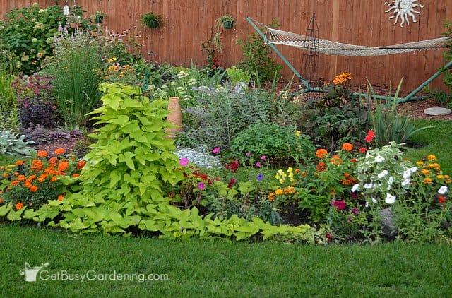 Full grown annual garden