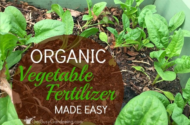 Organic Vegetable Fertilizer Made Easy