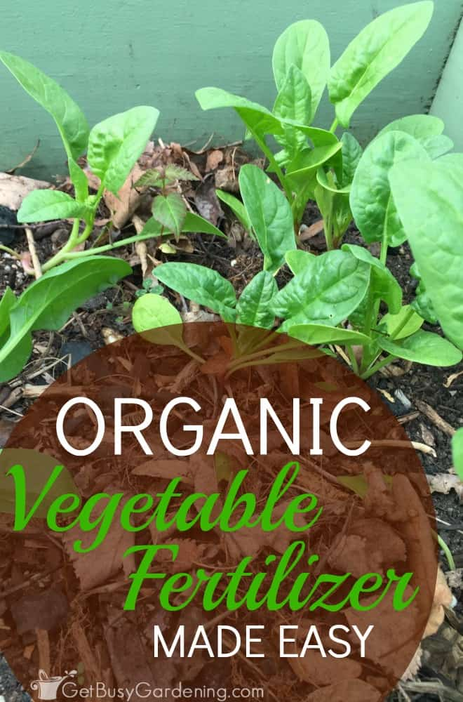 Using organic vegetable fertilizer in the garden shouldn't feel intimidating. Learn to work with nature to build rich, healthy, fertile soil.
