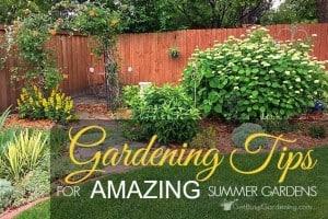 Gardening Tips For Amazing Summer Gardens