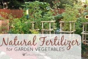 How To Use Natural Fertilizer For Garden Vegetables