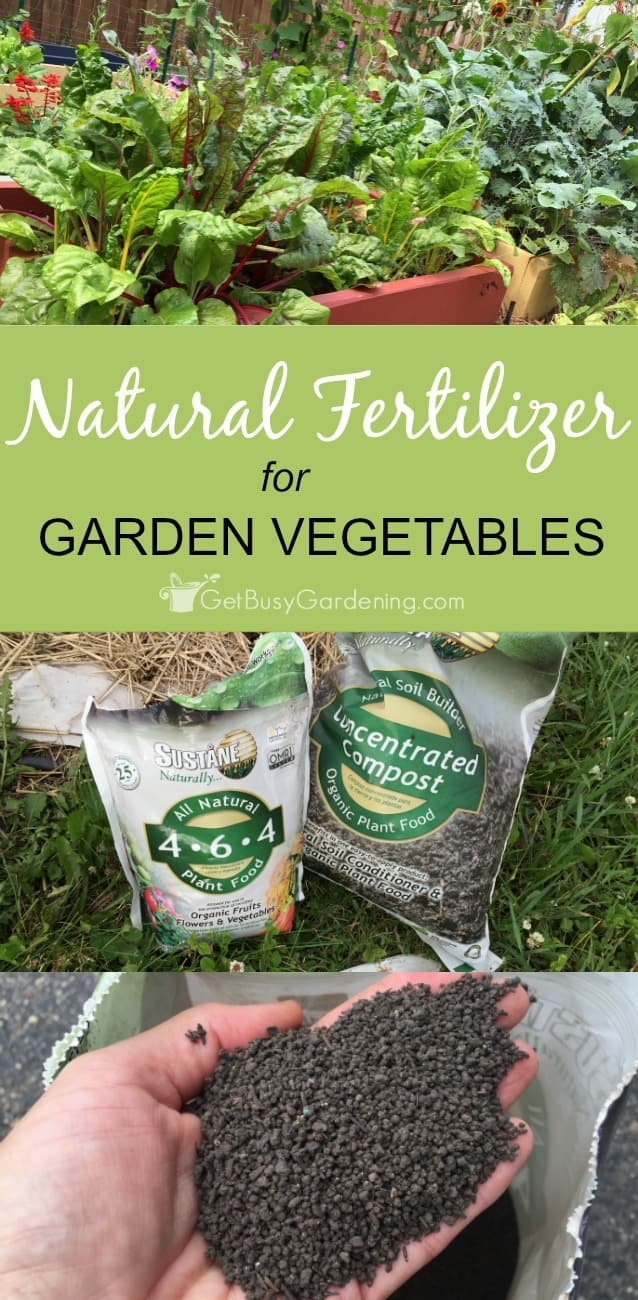Making the switch to organic gardening doesn't have to be intimidating! Using organic, natural fertilizer for garden vegetables is easy. (AD)