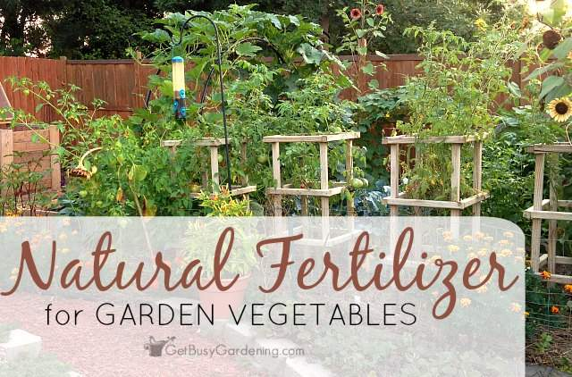 Natural fertilizer for garden vegetables