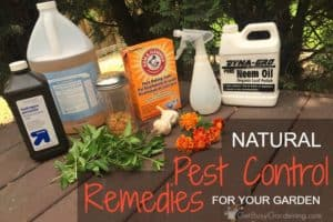 Natural Pest Control Remedies For Your Garden