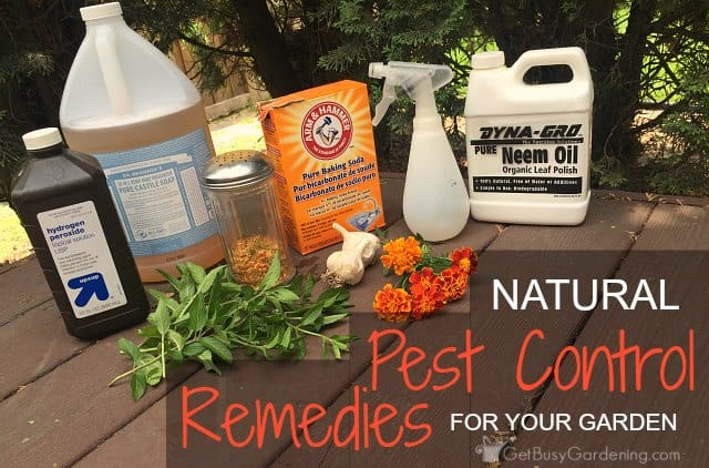 Natural Remedies For Pest Control