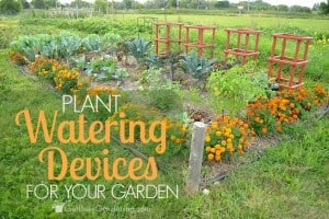 Plant watering devices for your-garden