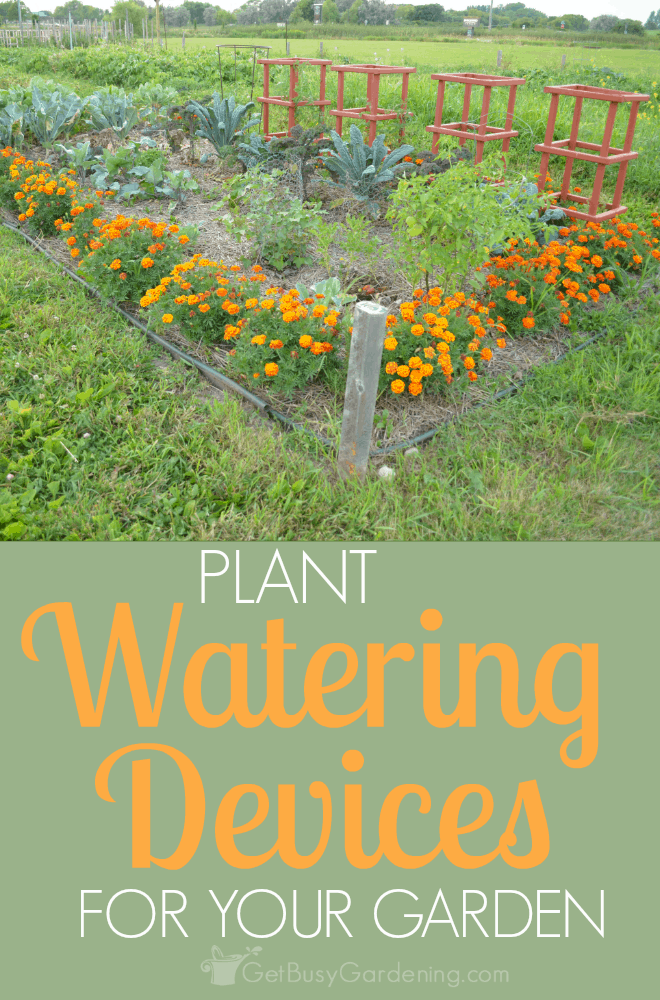 Using plant watering devices in your garden not only help to ensure your plants are getting enough water, but they also save time and water! (AD)