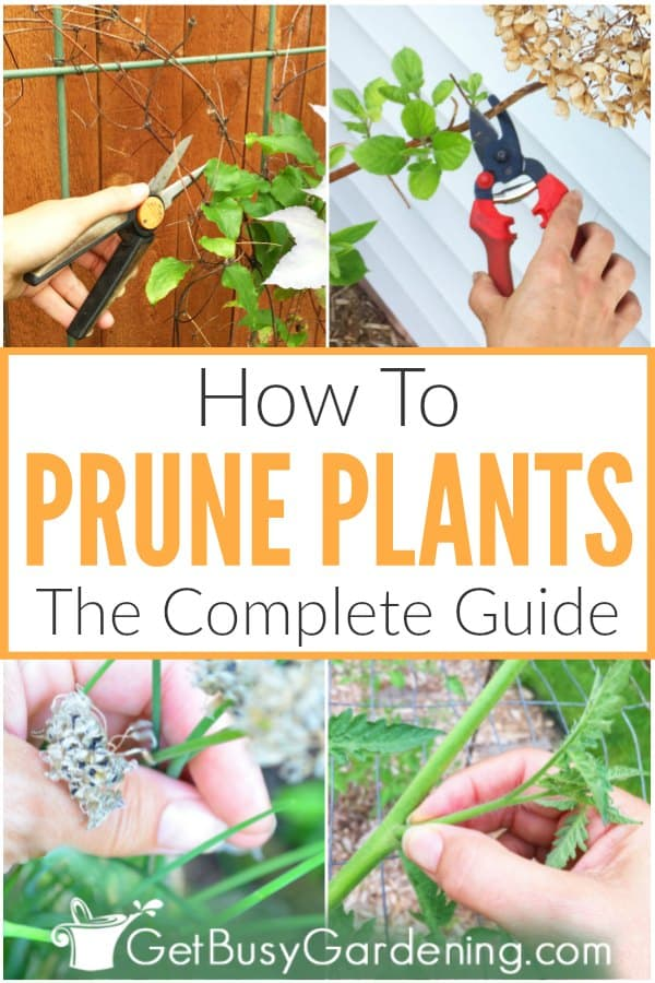 How To Prune Plants: The Complete Guide