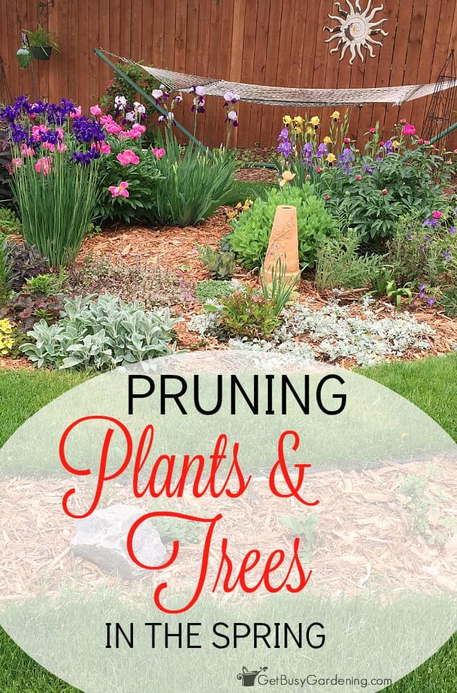 Pruning your plants and trees can be very intimidating to new gardeners! Let me make it super simple for you. In this post, I show you exactly how and when to prune plants and trees in the spring. (AD)
