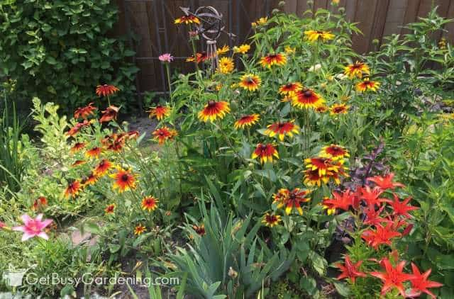 Summer blooming perennials