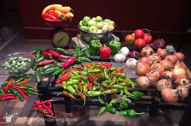 Yummy vegetables grown using natural fertilizer