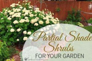 Partial shade shrubs