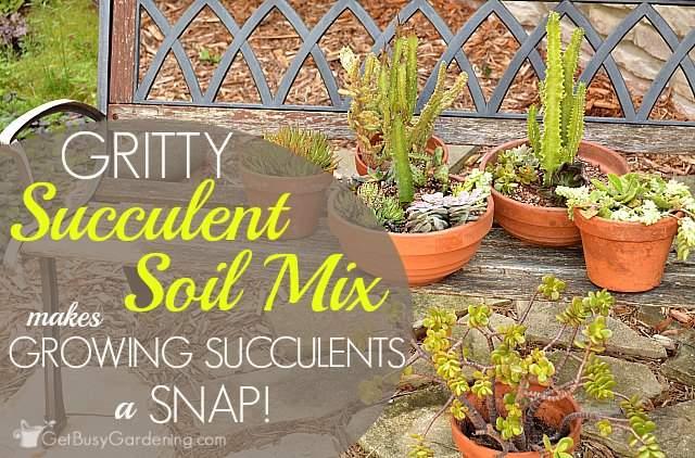 Gritty succulent soil mix makes growing succulents a snap!