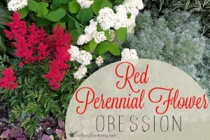 Red perennial flower
