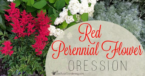 Red perennial flower obsession get busy gardening mightylinksfo