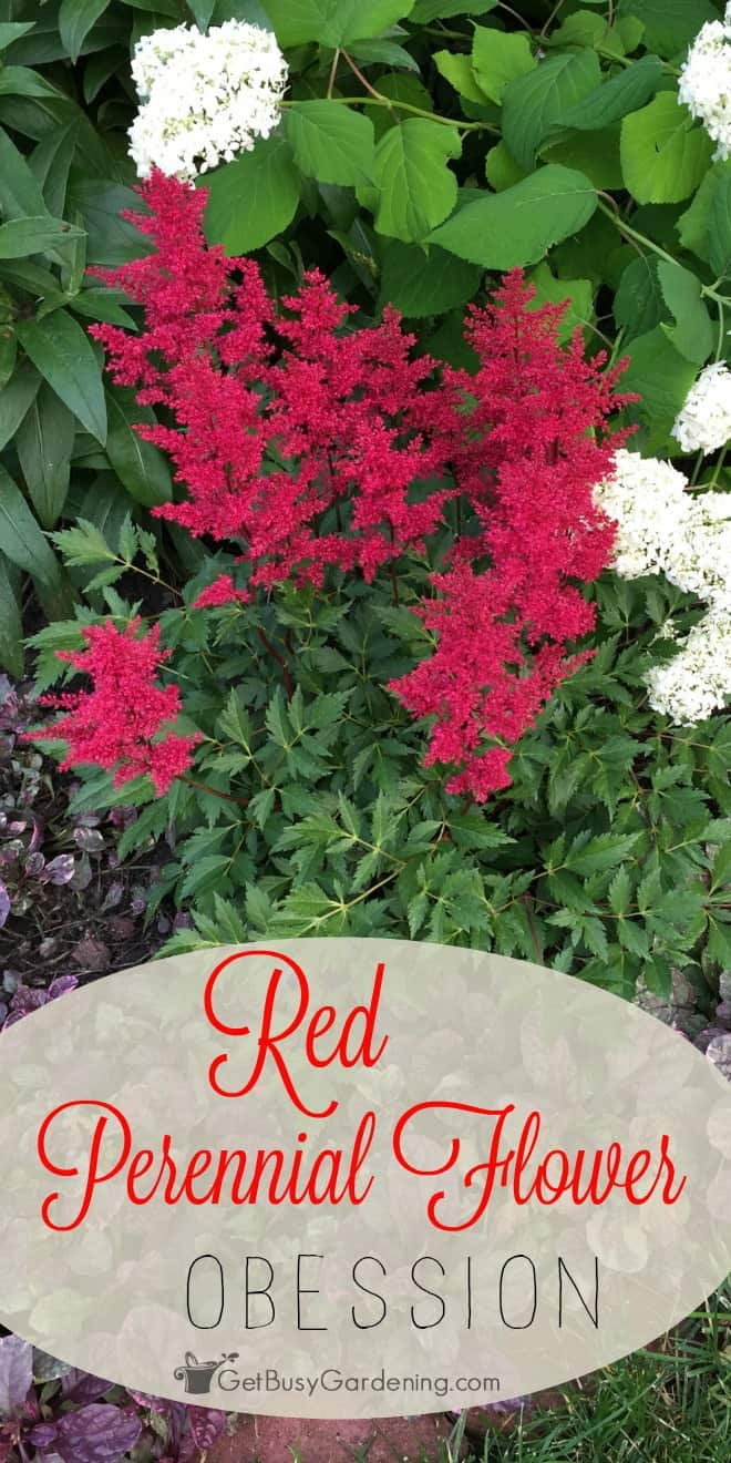 Red looks amazing in any garden. Even a single red perennial flower in a garden full of plants draws the eye right to it. Make red your new gardening obsession.