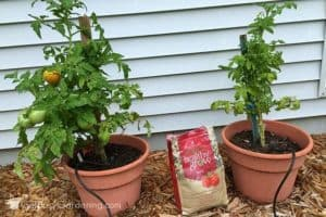 Update: Using Healthy Grow Organic Fertilizer