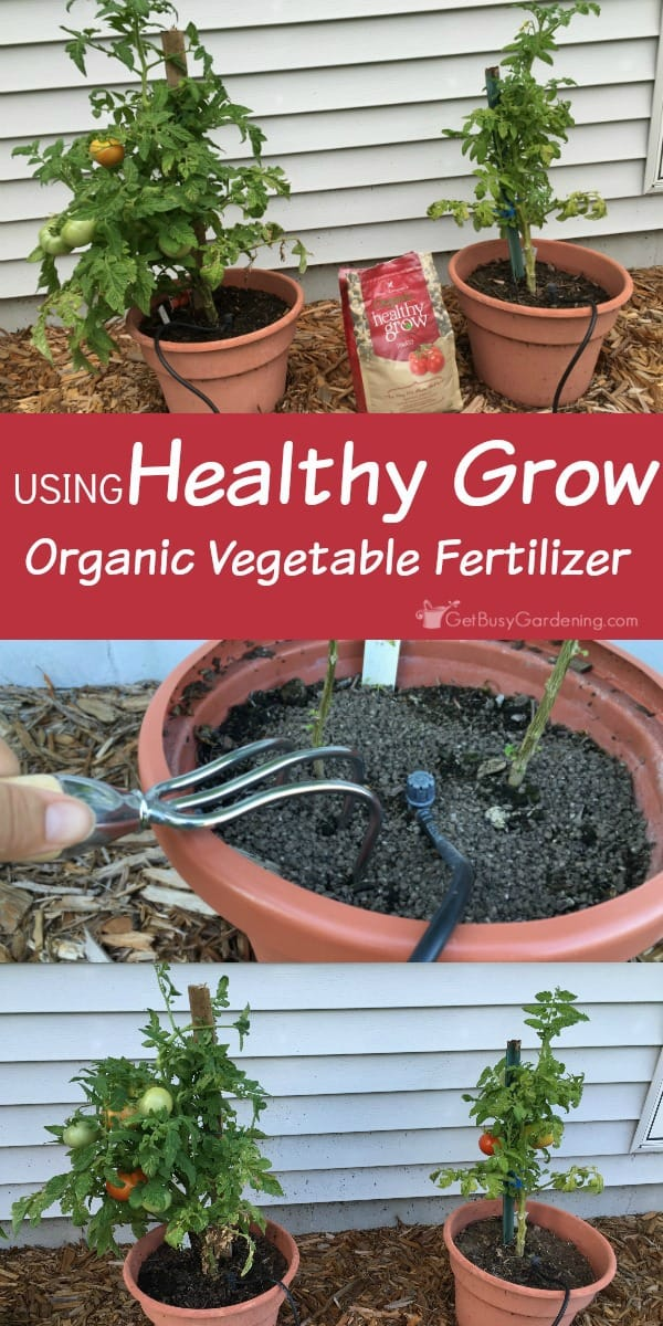 I started using Healthy Grow organic vegetable fertilizer in a few of my containers this spring, and I am totally sold!! Not only are the fertilized plants larger and taller than the unfertilized plant - they're also producing more food, and are healthier looking than the unfertilized plants. This is great stuff! (AD)