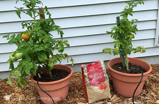 Results testing dave thompson 39 s healthy grow organic - Organic fertilizer for vegetable garden ...