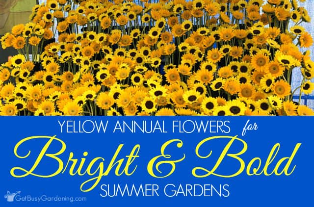 Yellow Annual Flowers