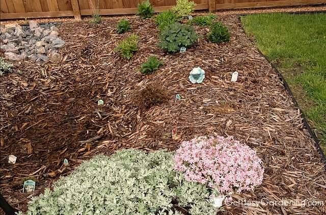 Rain garden spring - lots of room for adding allium flower bulbs