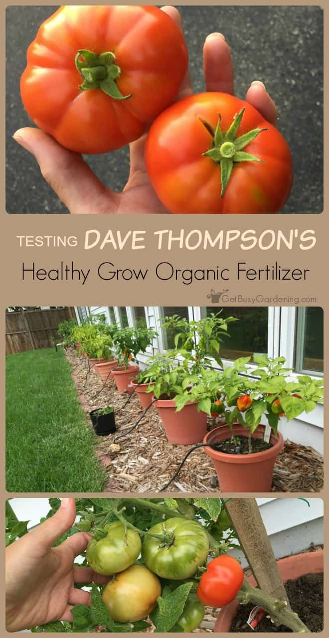 I am super impressed by how well Dave Thompson's Healthy Grow worked. I will definitely be using this again, and would recommend it to anyone who wants to grow their own healthy, organic (and amazing) food! (AD)