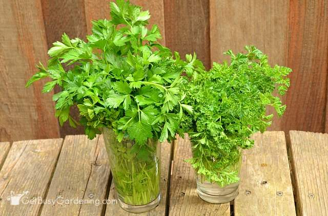 Store parsley in glass of water