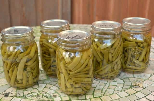 Canning green beans from the garden