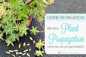 Define Propagation: What Is Plant Propagation (and how to get started)