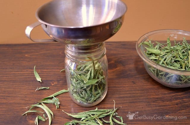 Fill jar with stevia leaves