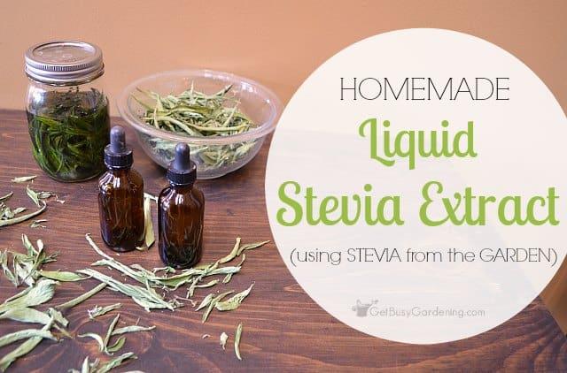Homemade liquid stevia extract