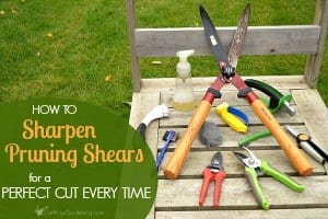 How to sharpen pruning shears for the perfect cut every time