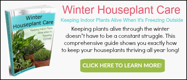 Succulent Plant Care Guide How To Take Care Of Succulent Plants
