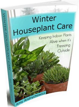 Succulent Plant Care How To Take Care Of Succulents As
