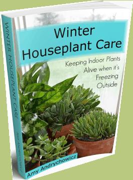 Winter houseplant care eBook