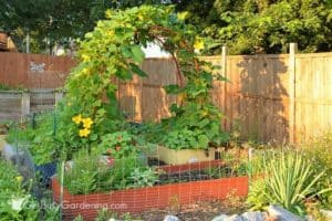 My 2016 vegetable garden