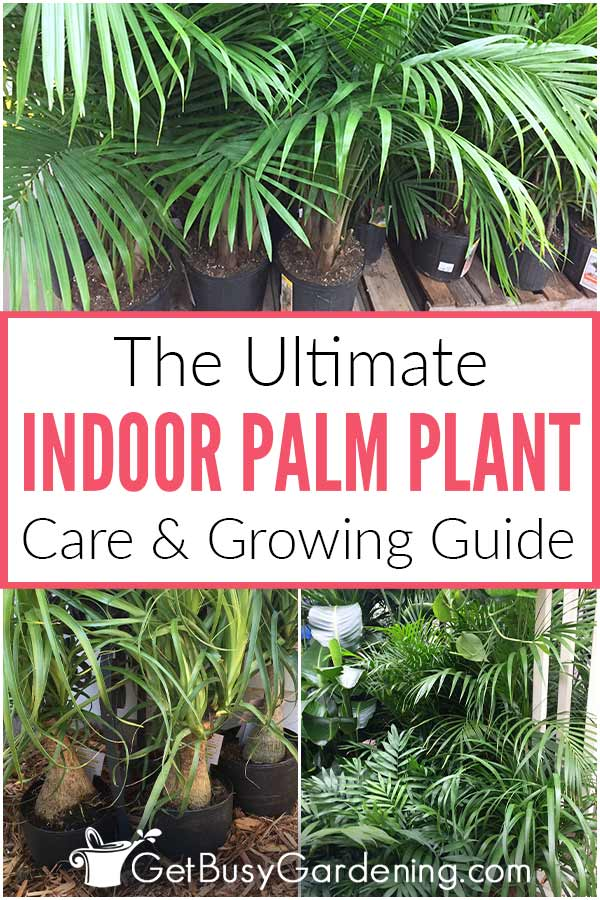The Ultimate Indoor Palm Plant Care Guide