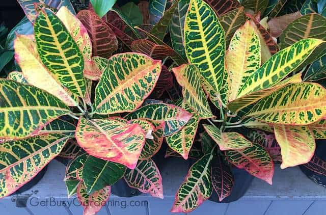 Tropical Houseplant Care A Guide To Growing Tropical