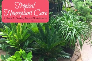 A Guide To Growing Tropical Plants Indoors