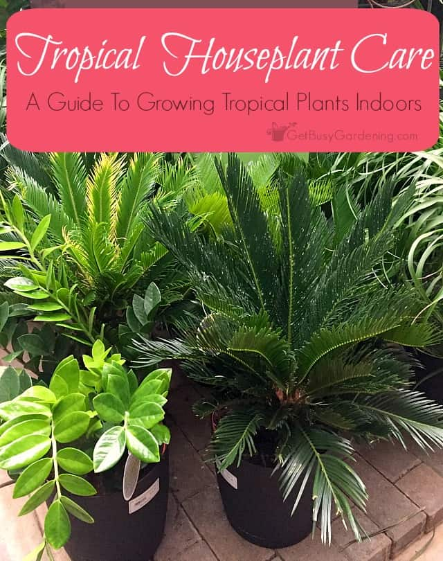 Exceptional Caring For Tropical Plants Part - 1: Tropical Plants Make Excellent Houseplants Because They Are Very Easy To  Care For. Thatu0027s Great .