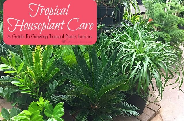 houseplant care a guide to growing tropical plants indoors, Natural flower