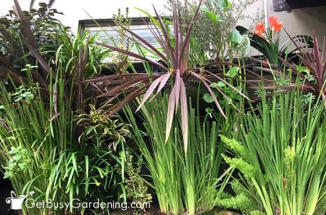 Group tropical plants together to ease indoor plant maintenance