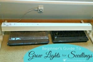 A Beginner's Guide To Grow Lights For Seedlings