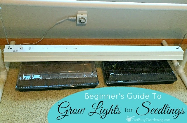 Lighting For Seedlings: A Beginner's Guide To Grow Lights For Seedlings