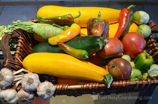Organic vegetables grown from seeds