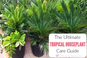 Tropical Houseplant Care Guide: How To Grow Tropical Plants Indoors