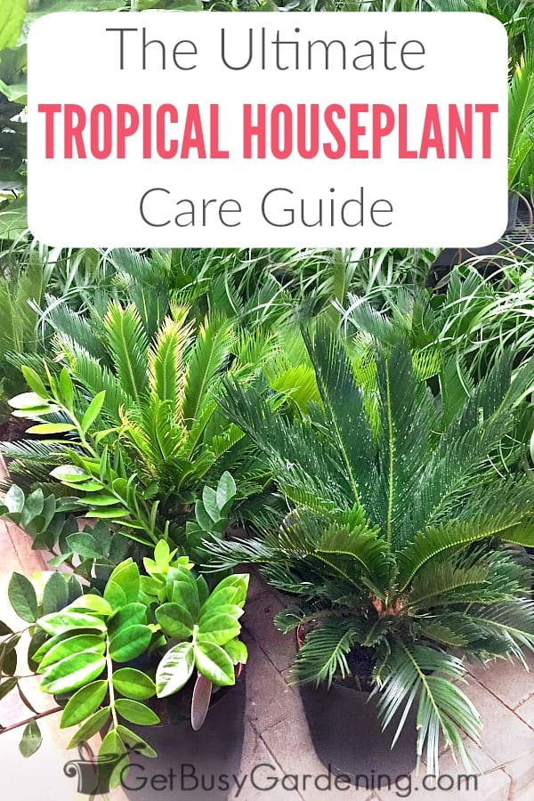 Tropical Plants Are Some Of The Prettiest Indoor And They Re Easy Houseplants